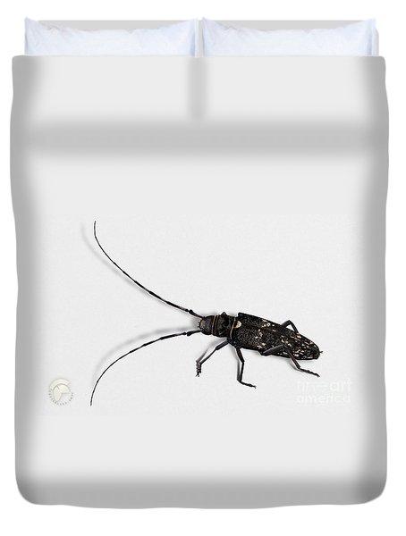 Long-hornded Wood Boring Beetle Monochamus Sartor - Coleoptere Monochame Tailleur - Duvet Cover