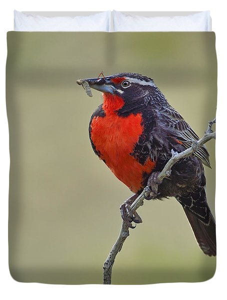 Long-tailed Meadowlark Duvet Cover by Tony Beck