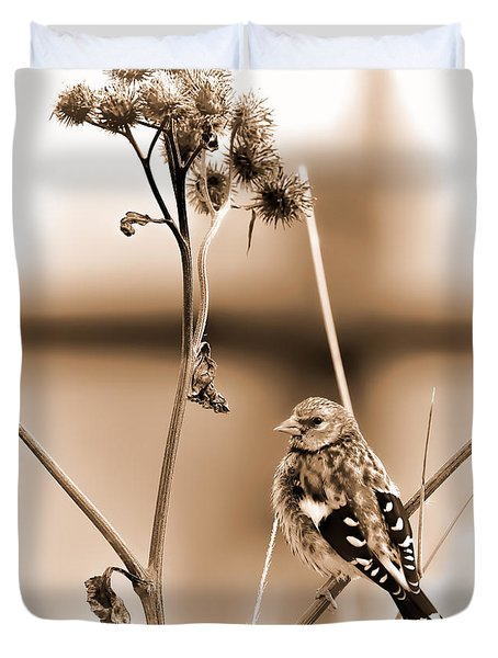 Looking Sep Small Brown Grey Yellow And Black Bird Posing For Portrait On A Branch Of A Plant Duvet Cover