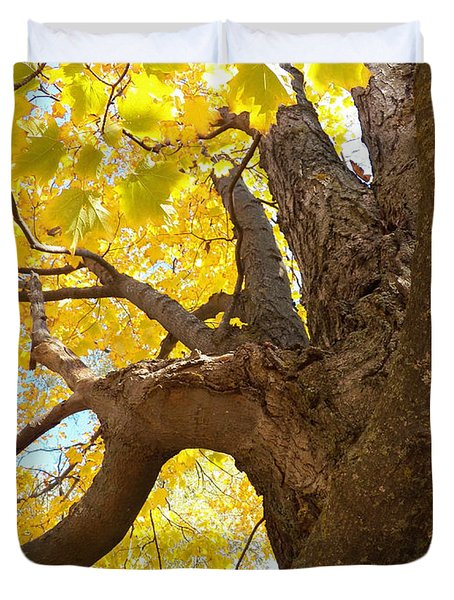 Looking Up The Maple Tree Duvet Cover