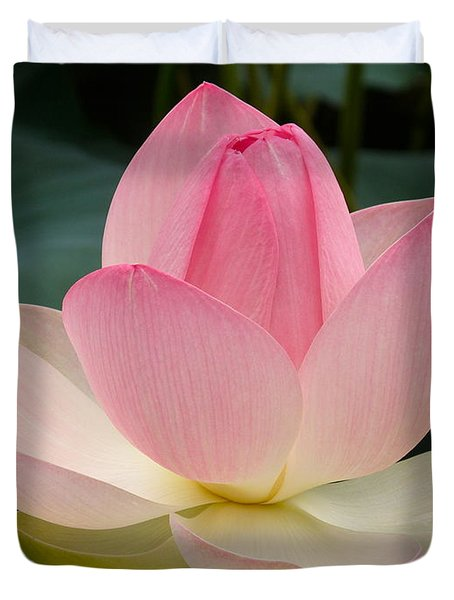 Lotus In Bloom Duvet Cover