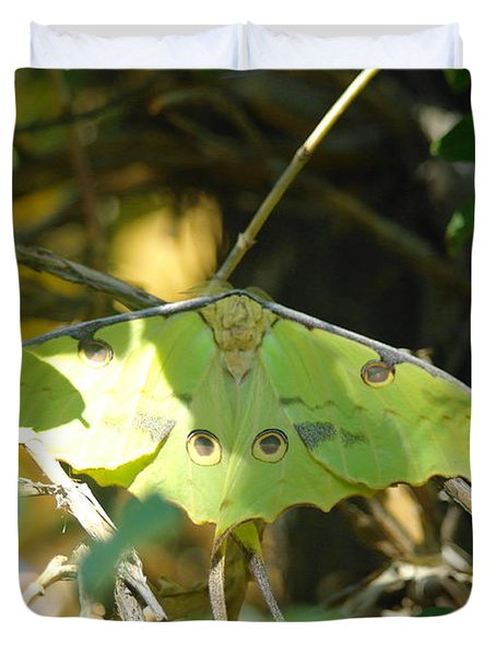 Luna Moth In The Sun Duvet Cover by Jeff Swan