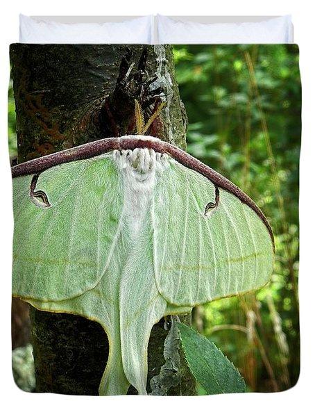 Luna Moth Duvet Cover
