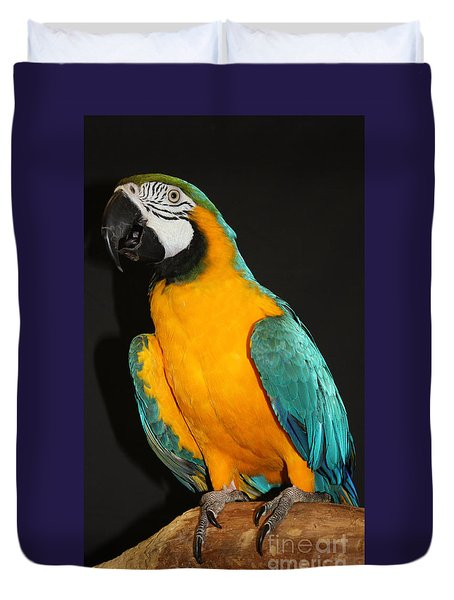 Macaw Hanging Out Duvet Cover by John Telfer