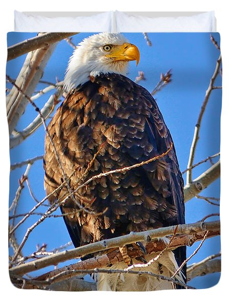 Majestic Bald Eagle Duvet Cover by Greg Norrell