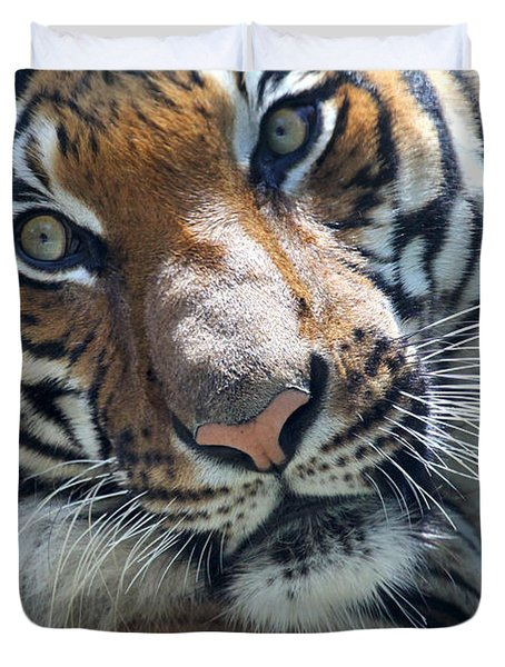 Malayan Tiger Duvet Cover