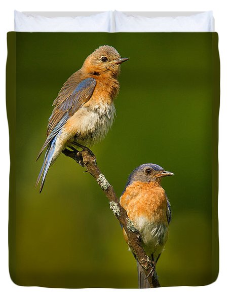 Duvet Cover featuring the photograph Male And Female Bluebirds by Jerry Fornarotto