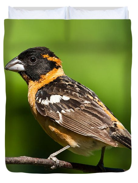 Male Black Headed Grosbeak In A Tree Duvet Cover