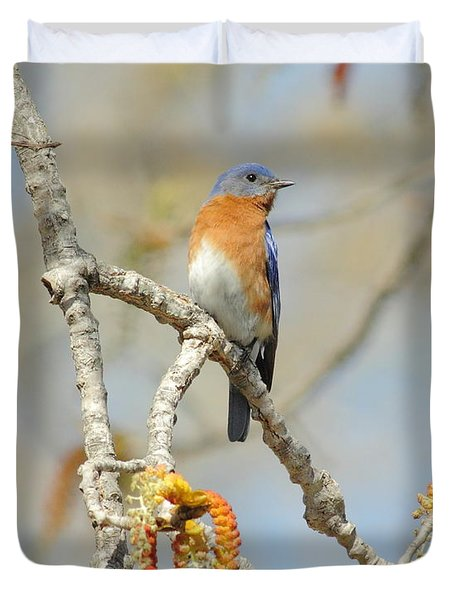 Male Bluebird In Budding Tree Duvet Cover