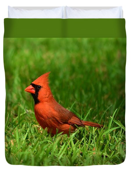 Male Cardinal Duvet Cover by Bob Sample
