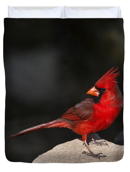Male Cardinal Duvet Cover by Gary Langley