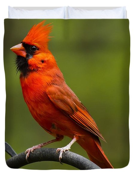 Duvet Cover featuring the photograph Male Cardinal by Robert L Jackson