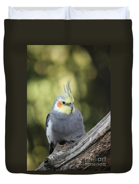 Duvet Cover featuring the photograph Male Cockatiel by Judy Whitton