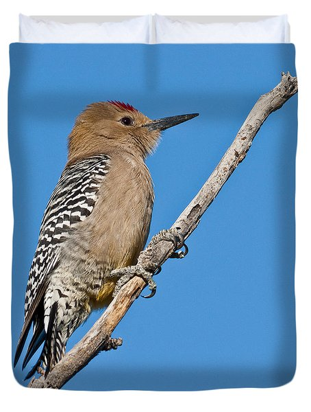 Male Gila Woodpecker Duvet Cover
