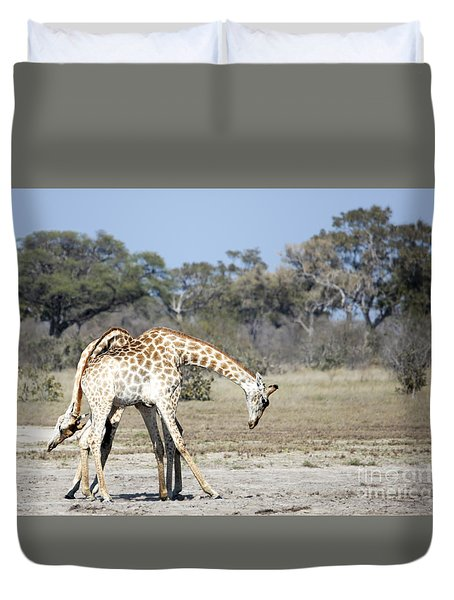 Male Giraffes Necking Duvet Cover