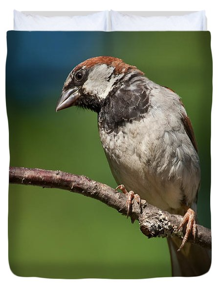 Male House Sparrow Perched In A Tree Duvet Cover