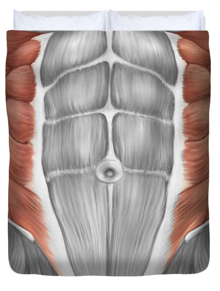 Male Muscle Anatomy Of The Abdominal Duvet Cover
