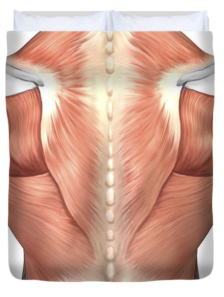 Male Muscle Anatomy Of The Human Back Duvet Cover