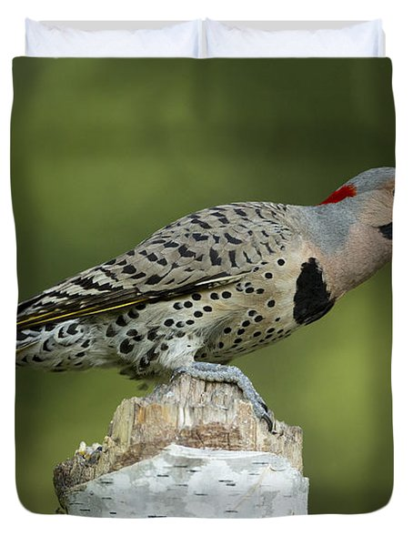 Male Northern Flicker Duvet Cover