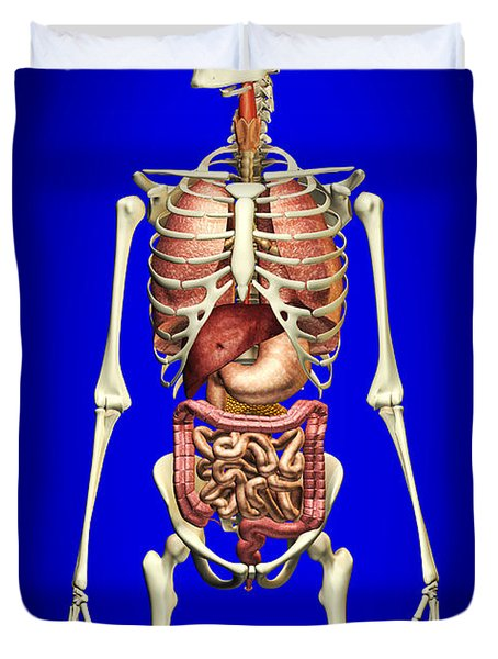 Male Skeleton With Internal Organs Duvet Cover by Leonello Calvetti