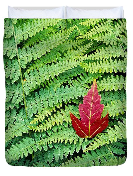 Duvet Cover featuring the photograph Maple Leaf On Ferns by Alan L Graham