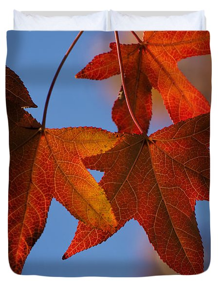 Duvet Cover featuring the photograph Maple Leaves In The Fall by Stephen Anderson