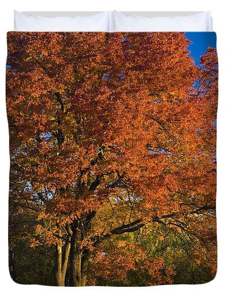 Maple Trees Duvet Cover by Brian Jannsen