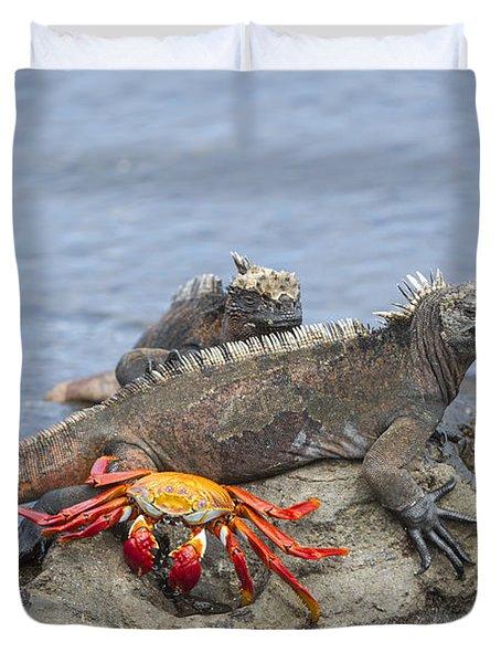 Marine Iguana Pair And Sally Lightfoot Duvet Cover