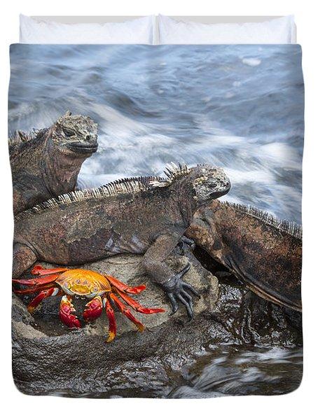 Marine Iguana Trio And Sally Lightfoot Duvet Cover
