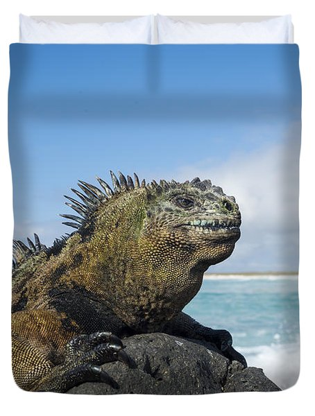 Marine Iguana Turtle Bay Santa Cruz Duvet Cover