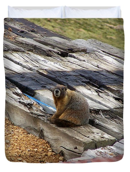 Marmot Resting On A Railroad Tie Duvet Cover