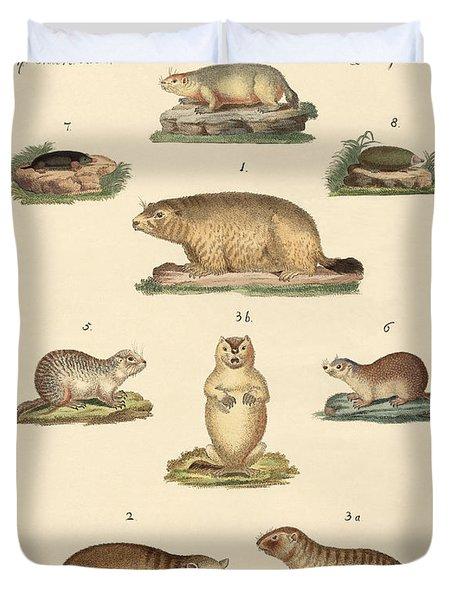 Marmots And Moles Duvet Cover by Splendid Art Prints