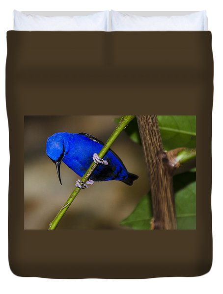Masked Blue Bird Duvet Cover by Penny Lisowski