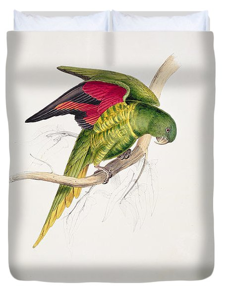 Matons Parakeet Duvet Cover by Edward Lear