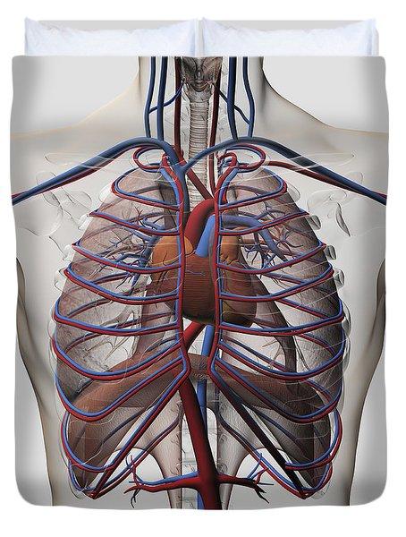 Medical Illustration Of Male Chest Duvet Cover