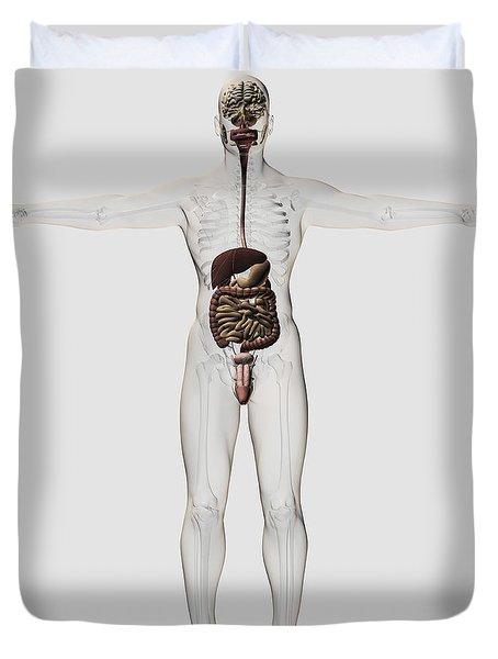 Medical Illustration Of Male Digestive Duvet Cover