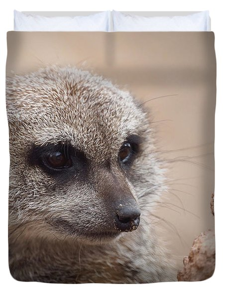 Meerkat 7 Duvet Cover by Ernie Echols