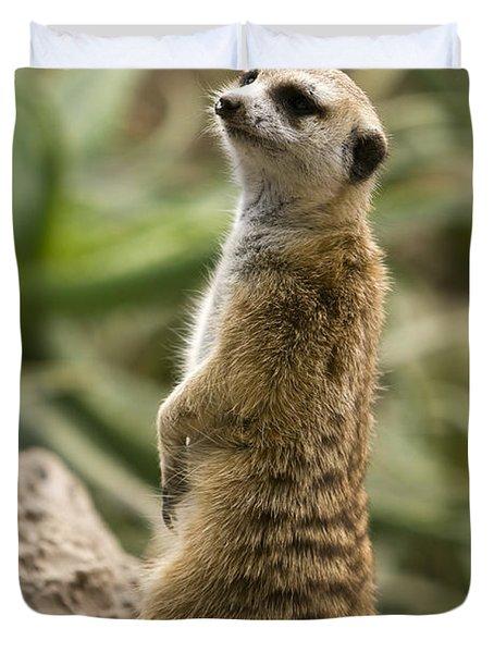 Duvet Cover featuring the photograph Meerkat Mongoose Portrait by David Millenheft