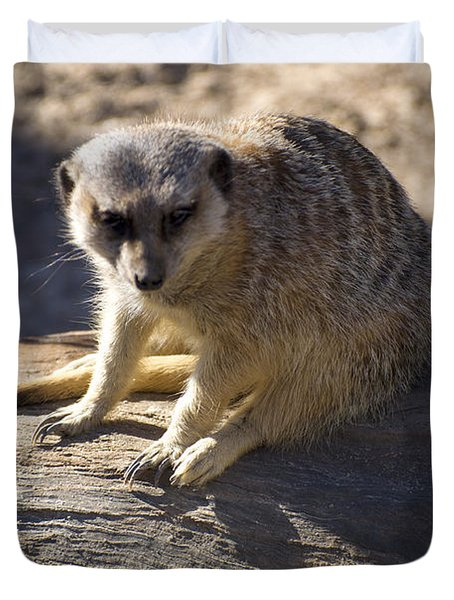Meerkat Resting On A Rock Duvet Cover by Chris Flees