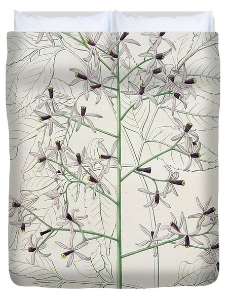 Melia Azedarach From 'phytographie Medicale' By Joseph Roques Duvet Cover by L F J Hoquart