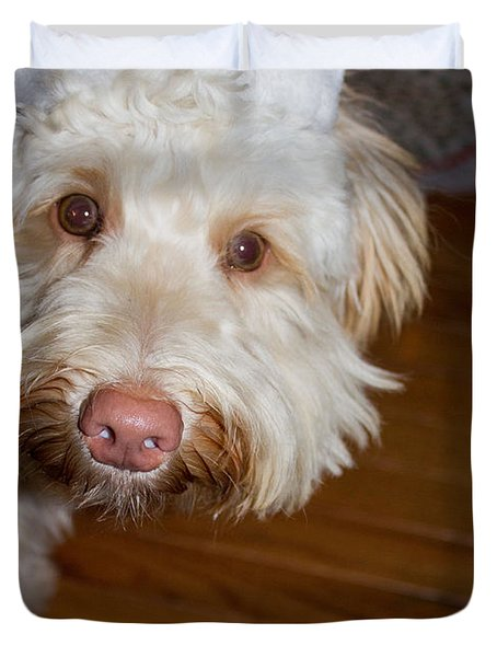Merry Christmas From A Labradoodle Duvet Cover