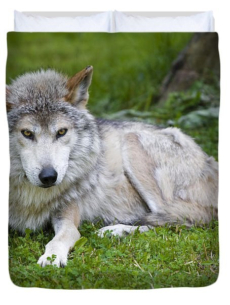 Duvet Cover featuring the photograph Mexican Gray Wolf by Sebastian Musial