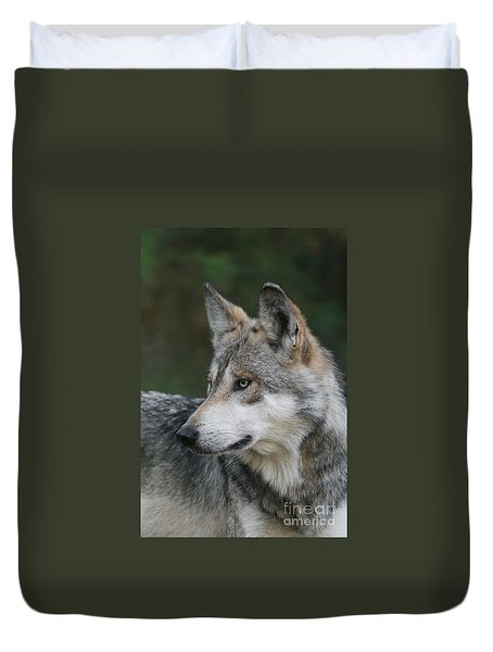 Mexican Wolf #6 Duvet Cover by Judy Whitton
