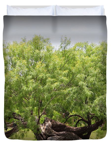 Mission Espada - Tree Duvet Cover by Beth Vincent