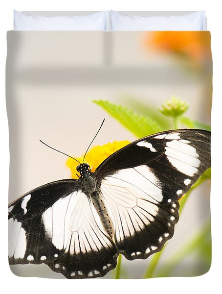 Mocker Swallowtail Duvet Cover by Anne Gilbert