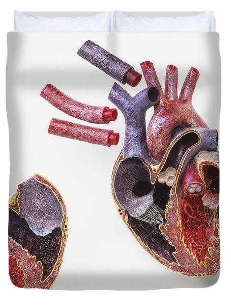 Model Of Human Heart Duvet Cover