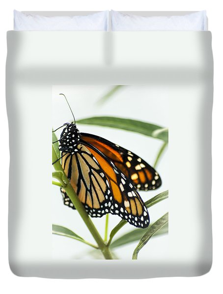Monarch Beauty Duvet Cover by Carolyn Marshall