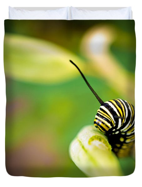 Monarch Offspring Duvet Cover