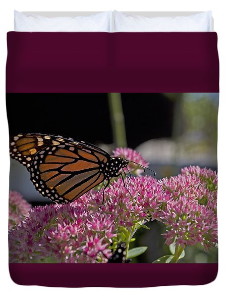 Monarch On Sedum Duvet Cover by Shelly Gunderson