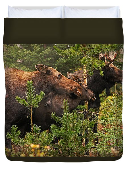 Moose Family At The Shredded Pine Duvet Cover by Stanza Widen